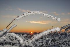 冬天日落结冰的植物 库存图片