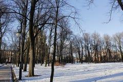 冬天早晨在公园 免版税库存图片