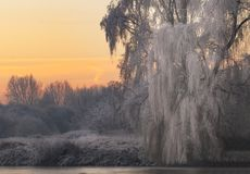 冬天早晨在布里曼德国附近的Teufelsmoor 图库摄影
