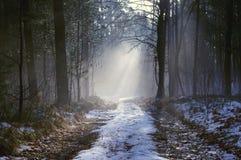冬天早晨在森林里。 免版税库存图片