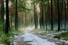 冬天早晨在森林里。 免版税图库摄影