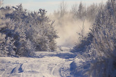 冬天早晨在白俄罗斯 库存图片