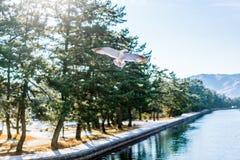 冬天早晨在Amanohashidate 免版税库存图片