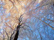 冬天早晨树冰 库存图片