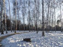 冬天早晨森林 免版税库存图片