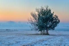 冬天早晨风景 库存图片