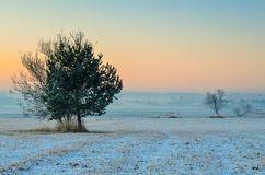 冬天早晨风景 免版税库存照片