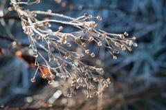 冬天早晨 免版税图库摄影