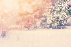 冬天明亮的背景 库存图片