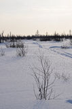 冬天晚上和冷淡的风景从北部 免版税库存照片