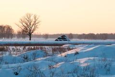 冬天晚上风景、偏僻的树和随风飘飞的雪, 库存图片