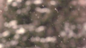 冬天暴风雪有模糊的森林背景 股票录像