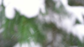 冬天暴风雪有模糊的森林背景 影视素材