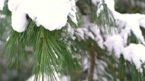 冬天暴风雪有模糊的森林背景 股票视频