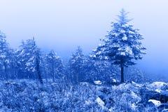 冬天有薄雾的森林 库存图片