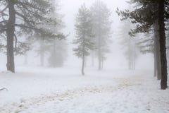 冬天有雾的天 免版税库存照片