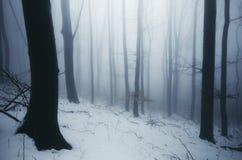 冬天有雾的妙境森林 免版税图库摄影