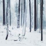 冬天有雾的森林场面 免版税库存照片