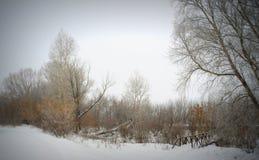 冬天有雾的横向 图库摄影