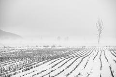 冬天有雾的横向 库存照片