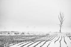 冬天有雾的横向 免版税库存照片