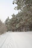 冬天有雾的风景在森林里 图库摄影