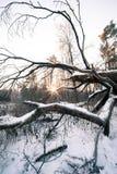 冬天木头横向 库存照片