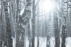 冬天木头横向 免版税库存图片