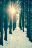 冬天木头横向 免版税图库摄影