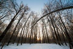 冬天木头横向 免版税库存照片