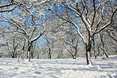 冬天木头 免版税库存照片