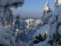 冬天木头 库存照片