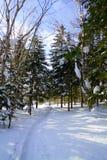 冬天木头在萨哈林岛海岛 免版税库存照片
