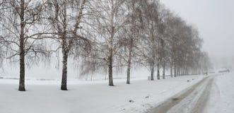 冬天本质横向 库存照片