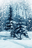 冬天本质,森林 免版税库存图片