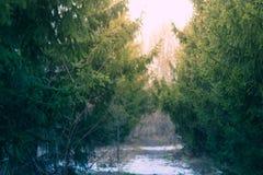冬天杉木与一棵被弄脏的圣诞树的深绿色背景分支 库存图片