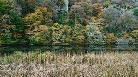 冬天来 在银行的秋天树tavy 免版税库存照片