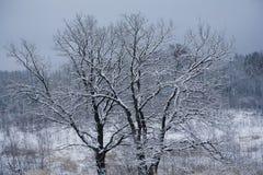 冬天树冠 免版税库存图片