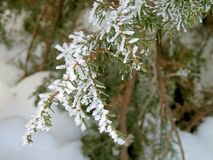 冬天树冰天气艺术和自然 库存图片
