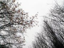 冬天树剪影反对天空的 库存照片