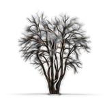冬天树剪影没有叶子的 库存图片
