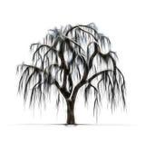 冬天树剪影没有叶子的 免版税库存图片