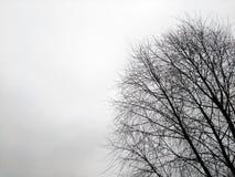 冬天树剪影  免版税图库摄影