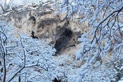 冬天树和岩石 免版税图库摄影