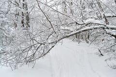 冬天树和灌木在雪 免版税库存照片