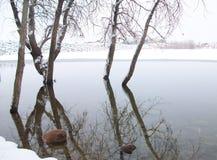冬天树在水中 免版税库存图片
