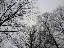 冬天树 库存图片