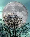 冬天树在满月和玉小野鸭日落天空下 库存图片