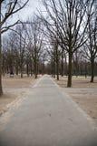 冬天树在巴黎 库存图片