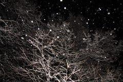 冬天树枝包括在黑背景的雪纹理 降雪在晚上,雪花 免版税库存图片